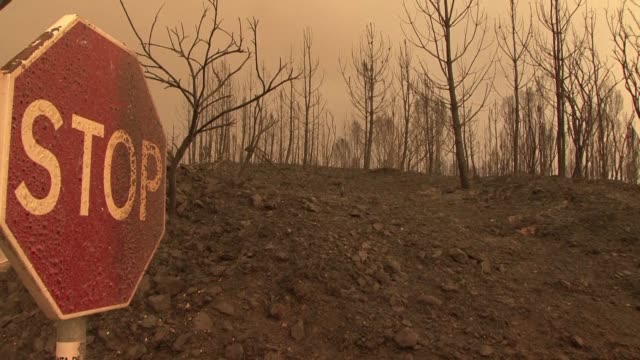 raging forest fires in central portugal have killed at least 61 people many burnt to death in their cars the government says in the country's worst... - portugal stock videos & royalty-free footage
