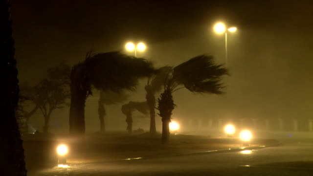 raging hurricane eyewall lashes palm trees - hurrikan stock-videos und b-roll-filmmaterial