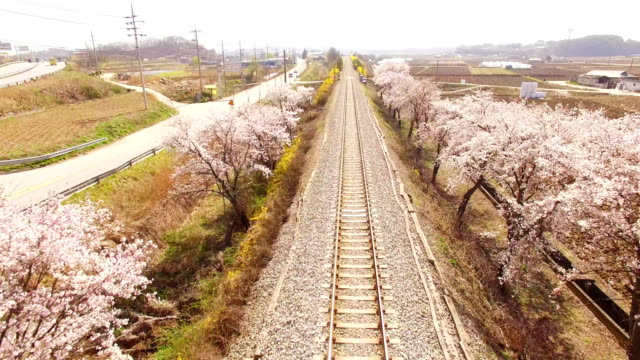 Railroad Track with Cherry blossom