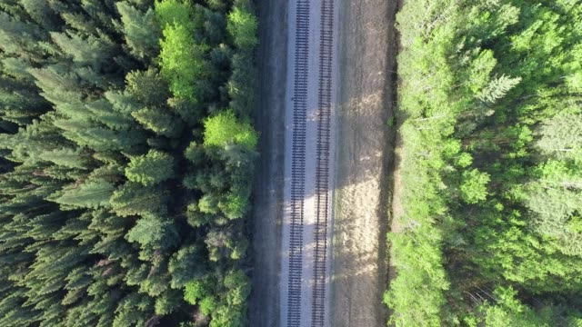 railroad tracks going through a boreal forest - railway track stock videos & royalty-free footage