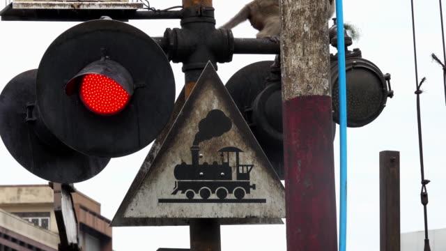eisenbahn-barriere mit affe - tier rücken stock-videos und b-roll-filmmaterial
