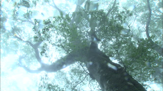 rain _daigahara nara - 雨粒点の映像素材/bロール