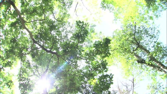 vídeos y material grabado en eventos de stock de rain _daigahara nara - cima del árbol