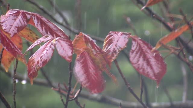vídeos y material grabado en eventos de stock de rain _daigahara nara - otoño