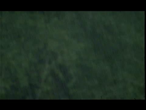 Rain against out of focus vegetation, Nagarhole, India