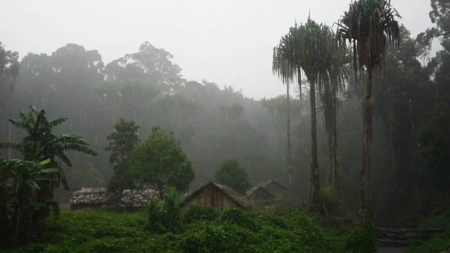 rain and forest shot - papua new guinea stock videos & royalty-free footage