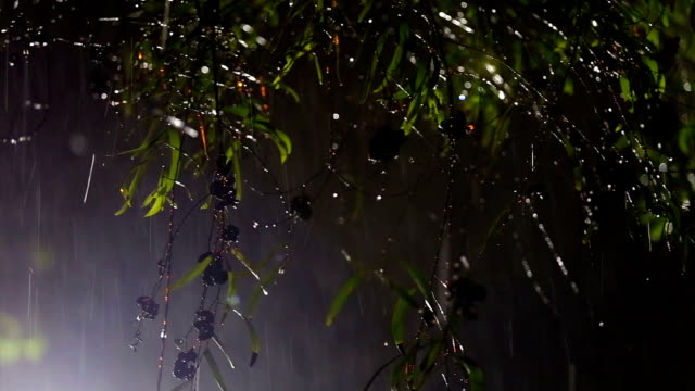 rain and nature - monsoon stock videos & royalty-free footage