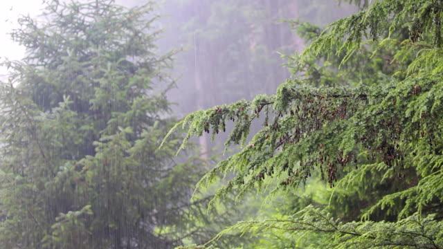 rain and trees, alaska - torrential rain stock videos & royalty-free footage