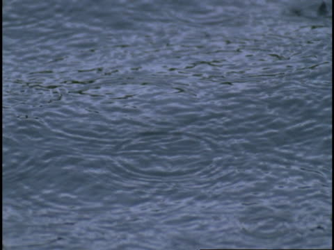 rain creates concentric circles as it splashes into telegraph cove. - concentric stock videos and b-roll footage
