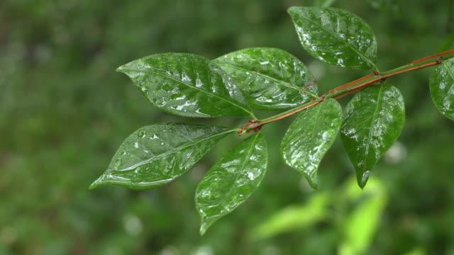 rain day - セレクティブフォーカス点の映像素材/bロール