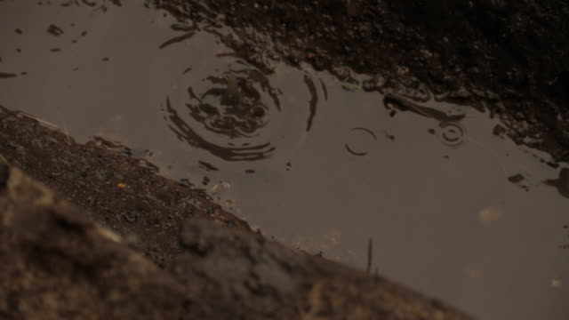 rain dripping 1 - puddle stock videos & royalty-free footage