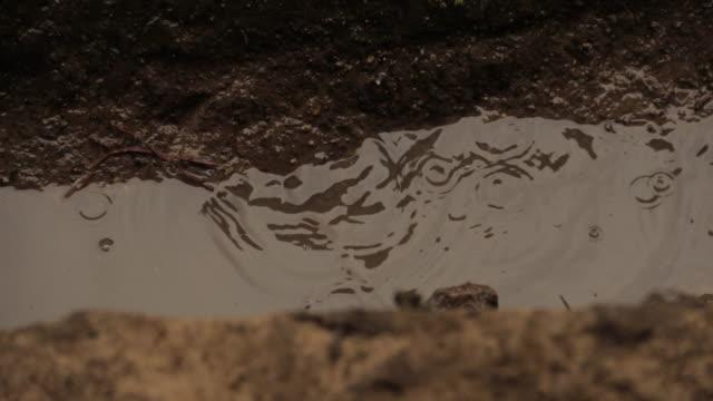 rain dripping 2 - raindrop stock videos & royalty-free footage