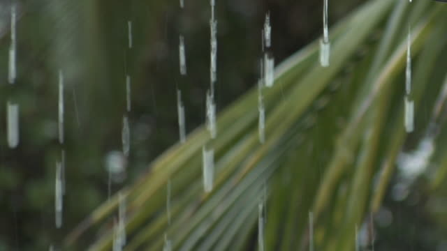 r/f rain dripping from eave near palm tree - raindrop stock videos & royalty-free footage