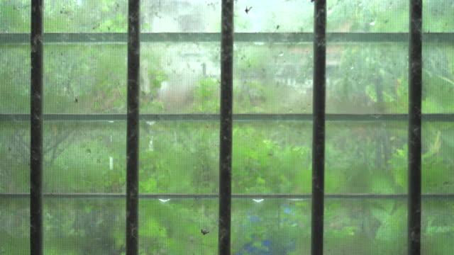 Rain Drop And Window