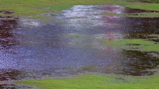 vídeos de stock, filmes e b-roll de gota de chuva caindo na água! - nível da superfície