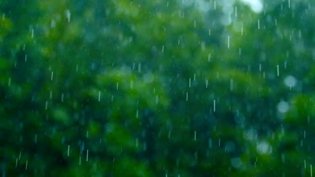 Gota de lluvia caer con la verde naturaleza