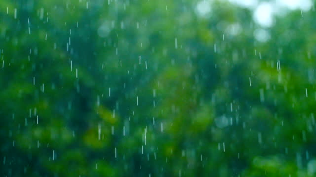 rain drop falling with green nature - formal garden stock videos & royalty-free footage