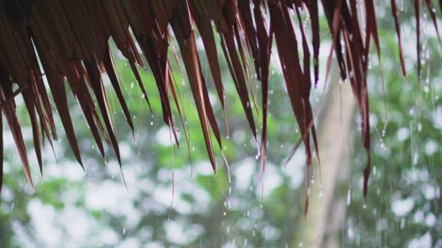 vídeos de stock e filmes b-roll de rain drop from leaf roof - telhado de palha