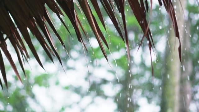 vídeos de stock e filmes b-roll de rain drop from leaf roof,slow motion - telhado de palha