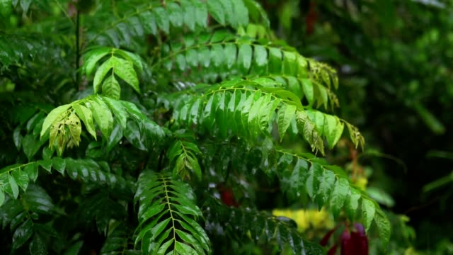 rain drop on beautiful green leaves blowing in the wind in tropical. - plant attribute stock videos and b-roll footage