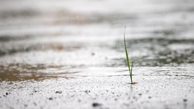 vídeos de stock, filmes e b-roll de 4k: gota de chuva no chão - pingo de chuva