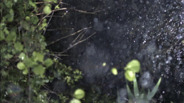 Rain drops falling downwards into pond, UK