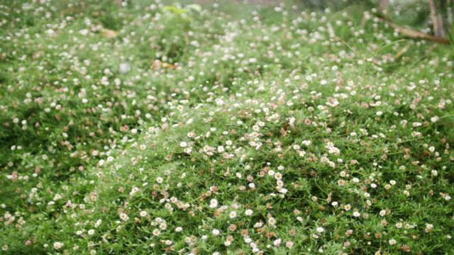vidéos et rushes de gouttes de pluie tombant de la feuille verte dans la forêt, 4k - commencement