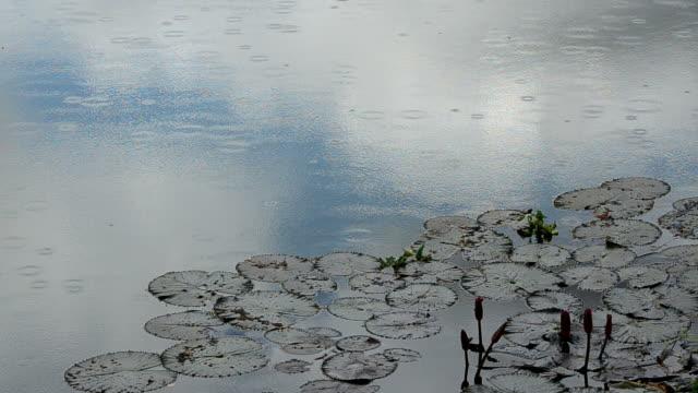 Rain Drops in a pond