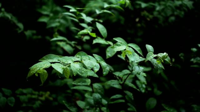 Regen druppels op groene bladeren