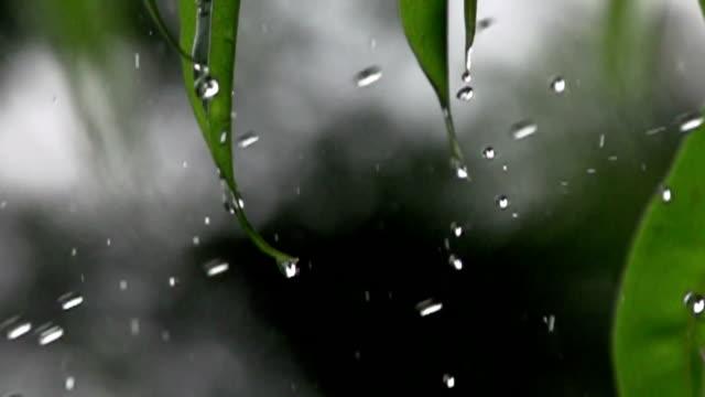 vídeos de stock, filmes e b-roll de chuva cai câmera lenta - pingo de chuva