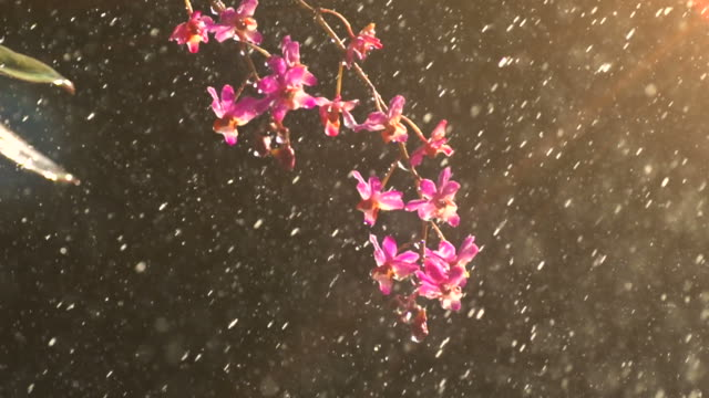 rain fall on pink orchid slow - orchid stock videos & royalty-free footage