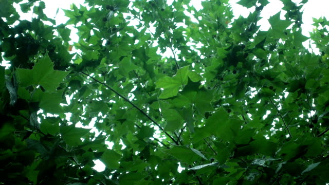 vídeos de stock e filmes b-roll de rain fall on tree leaves - gota a cair na água