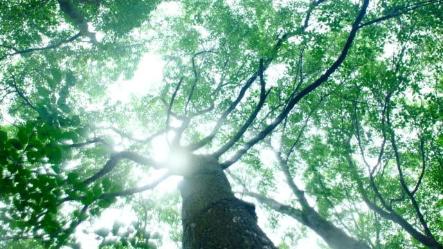 森の木から降る雨 - 木立点の映像素材/bロール