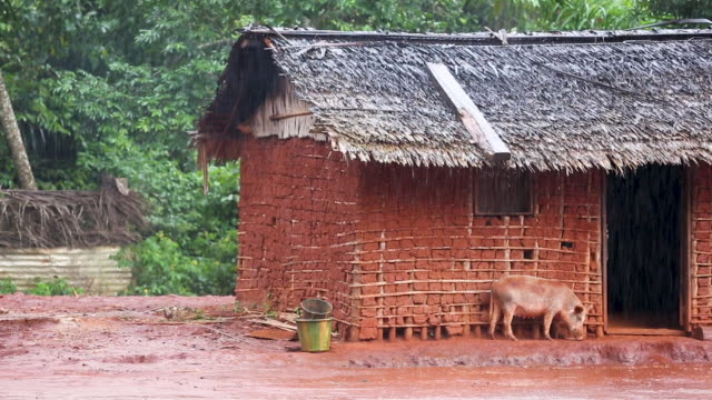 Rain falling hard in African community while pig tries to go in clay hut