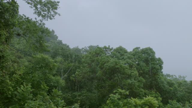 WS TU Rain falling in forest / Panamá Province, Panama