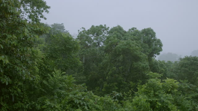 WS PAN Rain falling in forest / Panamá Province, Panama