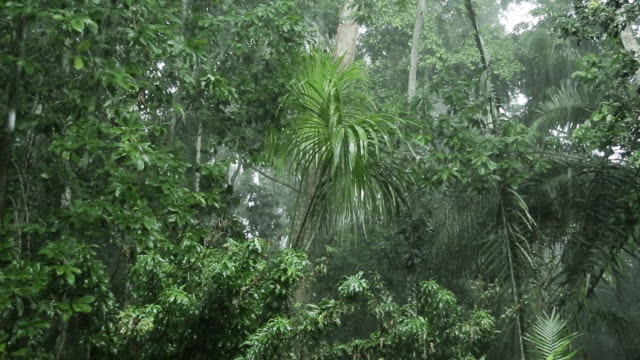 Rain falling in the interior of tropical rainforest