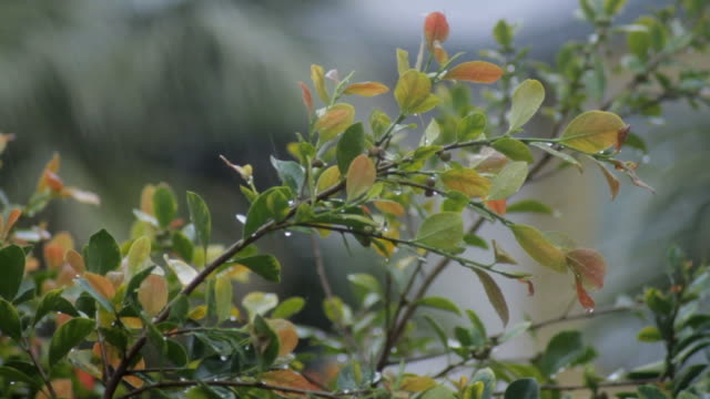 rain falling off leaves - southern california stock videos and b-roll footage