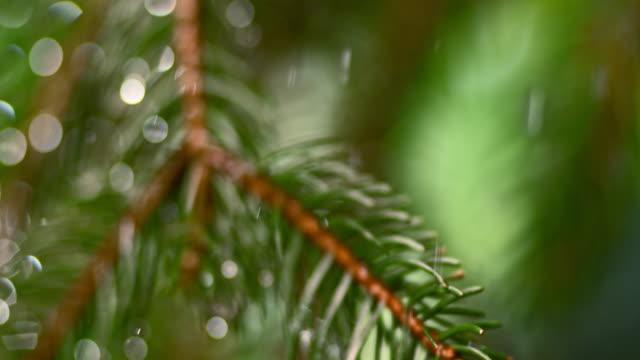 slo mo td rain falling on a fir leaf - fir tree stock videos & royalty-free footage