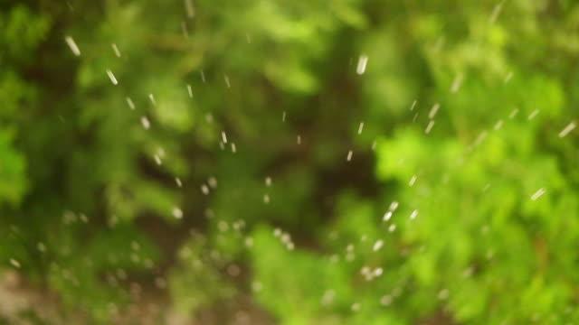 vídeos de stock, filmes e b-roll de chuva caindo sobre uma folha - pingo de chuva