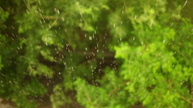rain falling on a leaf - lawn stock videos & royalty-free footage