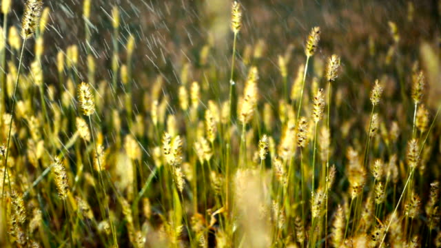 rain falling on grass - floral pattern stock videos & royalty-free footage