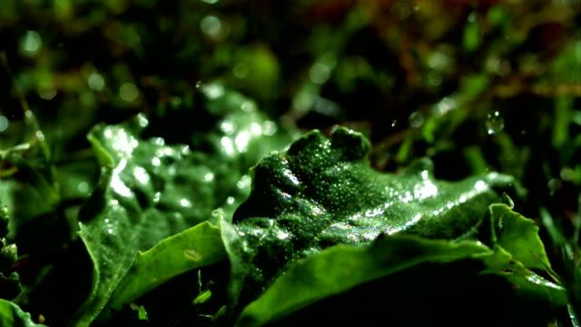 rain falling on green plants - hohe aufnahmegeschwindigkeit stock-videos und b-roll-filmmaterial