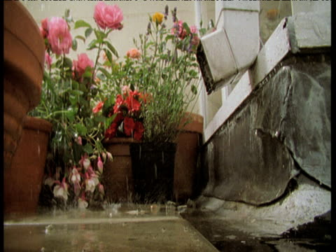 Rain falling on patio and plants, water gushes out of drainpipe