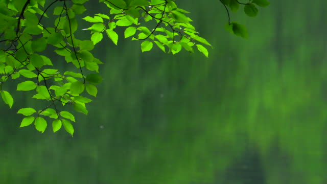 rain falling on the green lake - pond stock videos & royalty-free footage