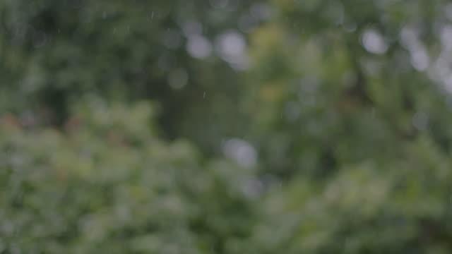 ms rain falling on tree in rainforest / panamá province, panama  - aufblenden stock-videos und b-roll-filmmaterial