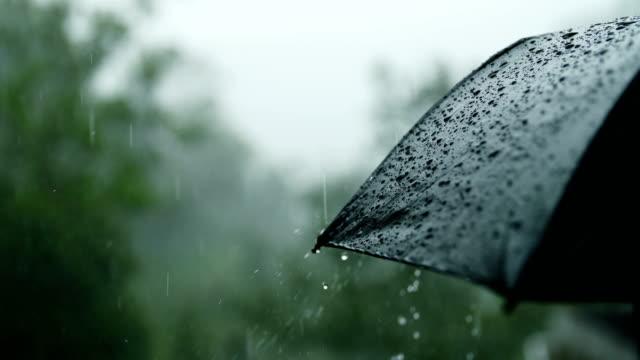 rain falling on umbrella - torrential rain stock videos & royalty-free footage