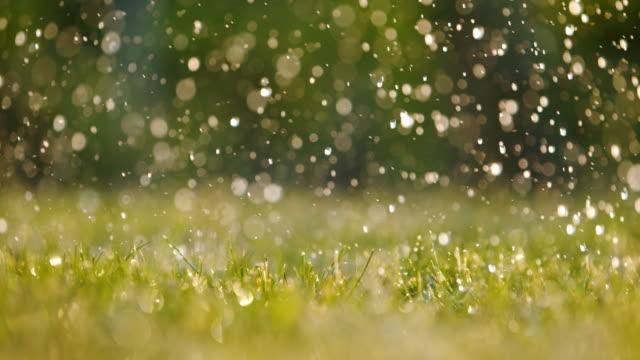 新鮮な緑の草の上に落ちるcu雨 - 水撒き点の映像素材/bロール