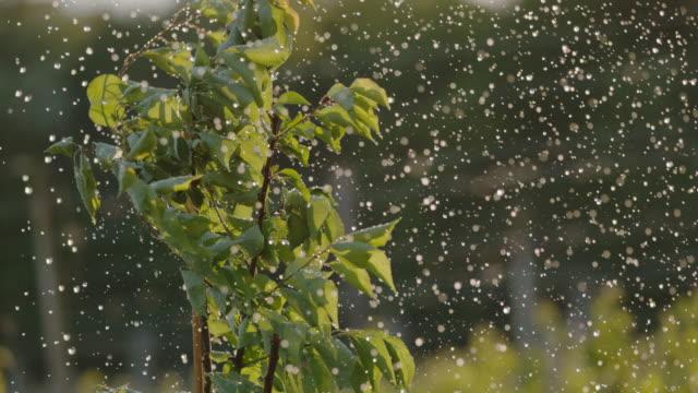 果樹園の若い緑の果樹の上に落ちるms雨 - 果樹園点の映像素材/bロール