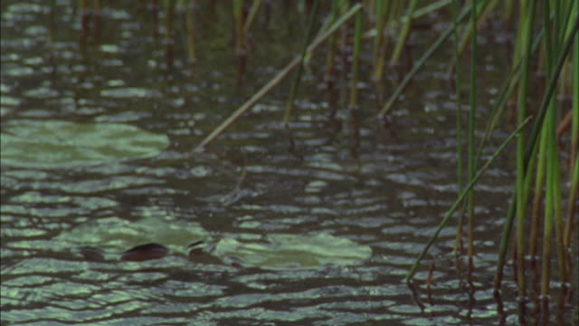 Rain falls heavily over a pond.
